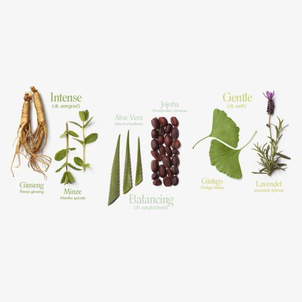 botanique_haut